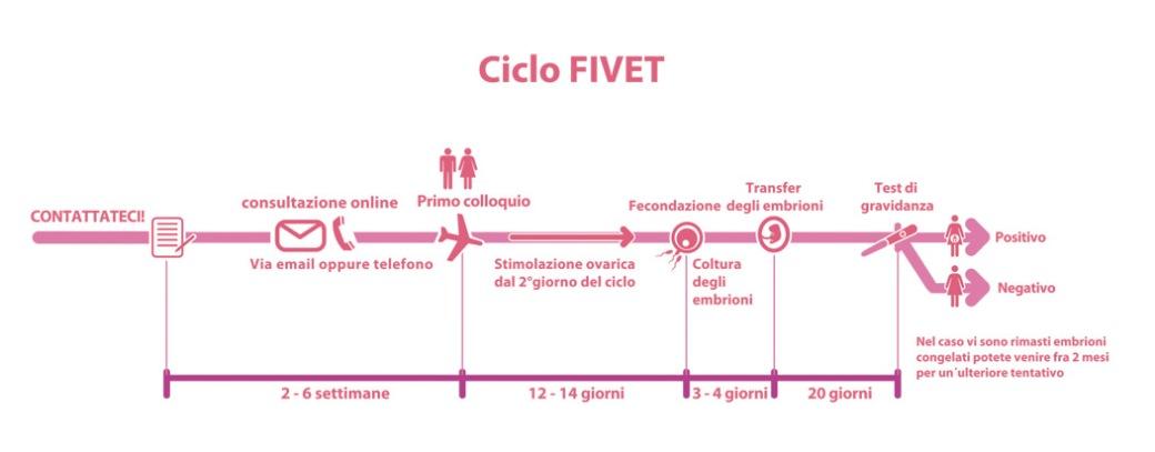 Ciclo FIVET